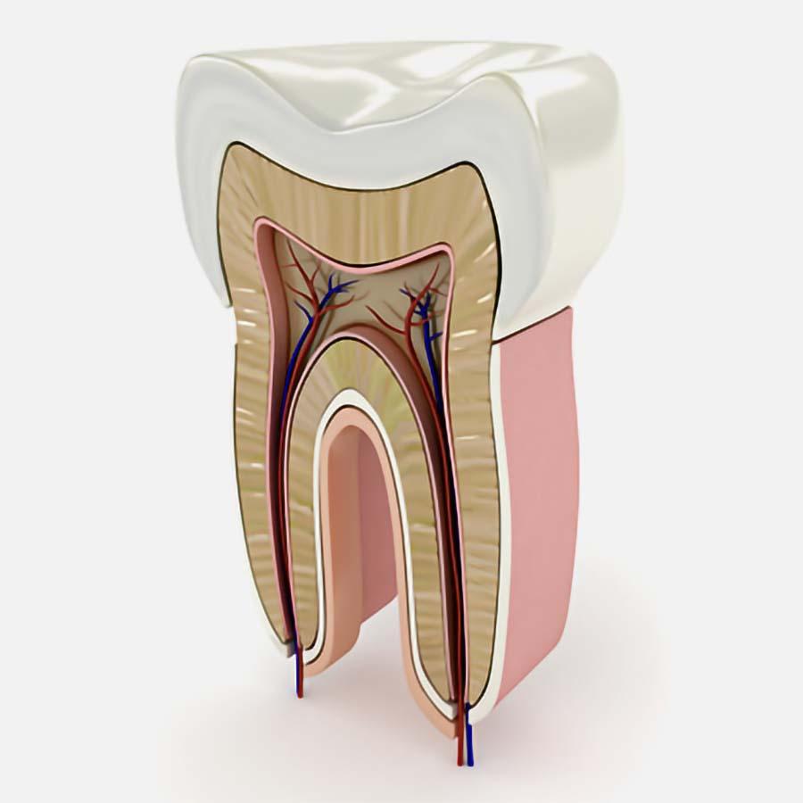 Endodonzia - Dentista - Ferrara Medica - poliambulatorio specialistico privato a Ferrara (FE)